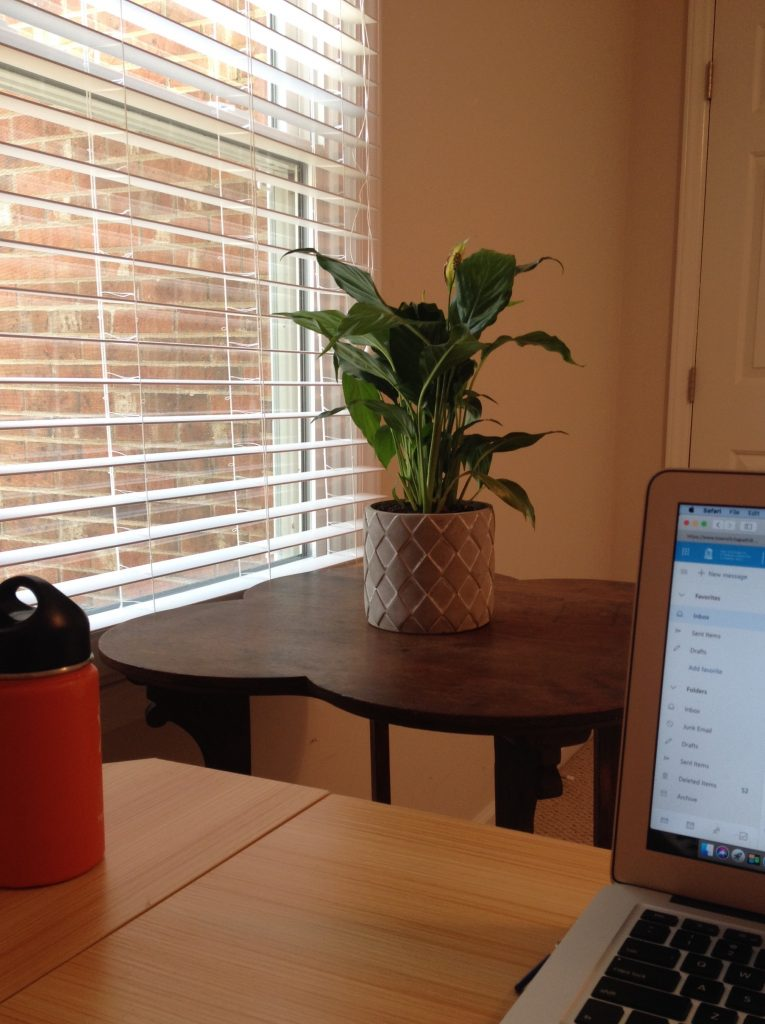 My remote work station would not be complete without a good view of my roommate/houseplant, Steven. Yes, he has a name.