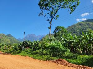 Road to Ibanda Village