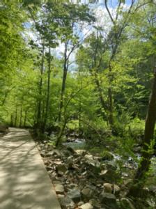 My favorite walking trail (Bolin Creek Trail in Chapel Hill)